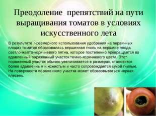 Преодоление препятствий на пути выращивания томатов в условиях искусственного