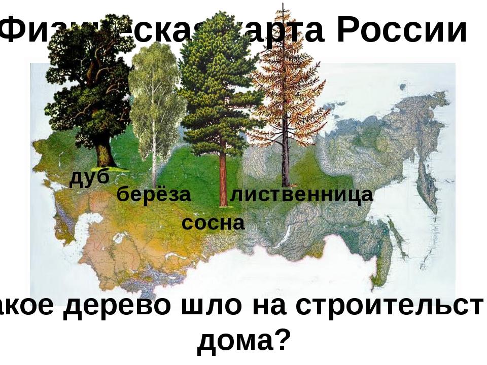 Физическая карта России дуб берёза сосна лиственница Какое дерево шло на стро...