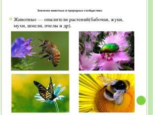 Значение животных в природных сообществах: Животные — опылители растений(бабо