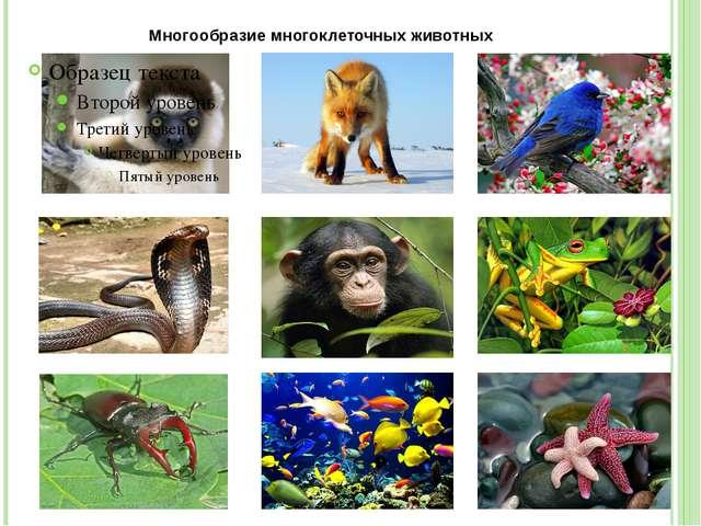 Многообразие многоклеточных животных