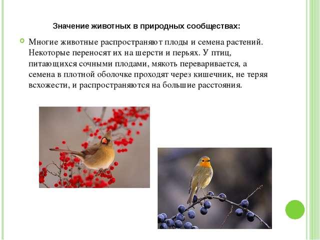 Значение животных в природных сообществах: Многие животные распространяют пло...