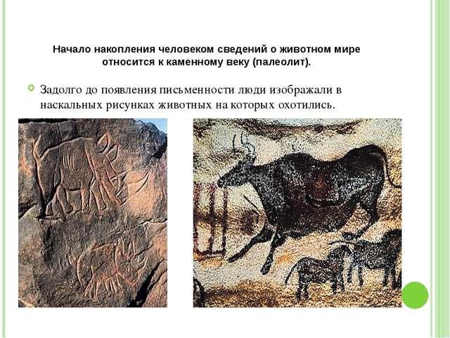 Начало накопления человеком сведений о животном мире относится к каменному ве...