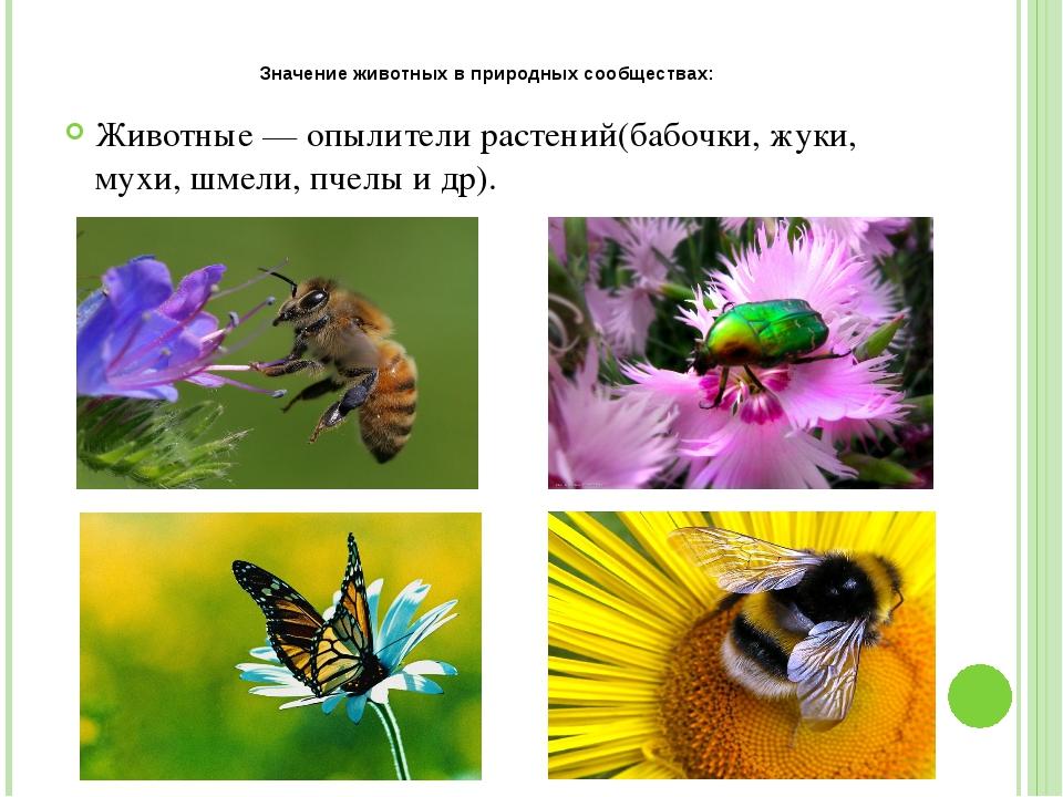 Значение животных в природных сообществах: Животные — опылители растений(бабо...