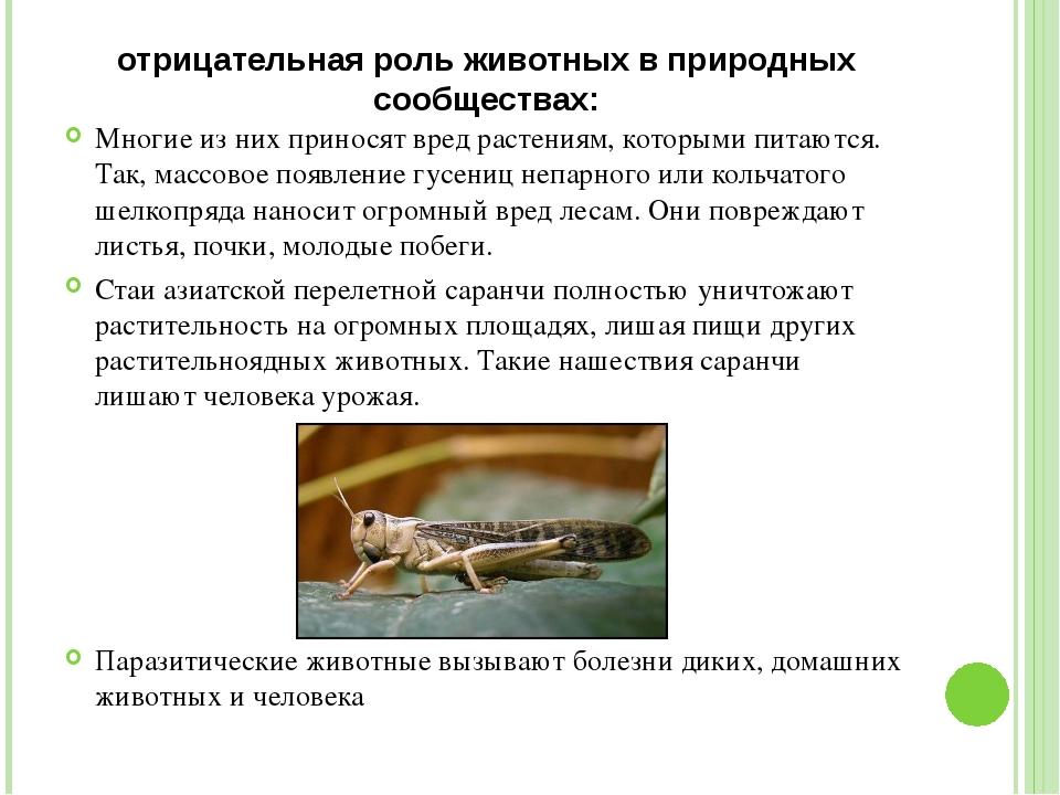 отрицательная роль животных в природных сообществах: Многие из них приносят в...