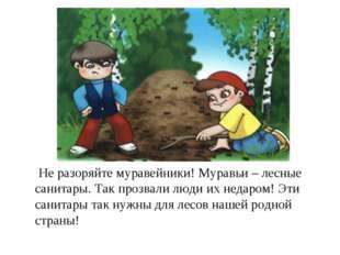Не разоряйте муравейники! Муравьи – лесные санитары. Так прозвали люди их не