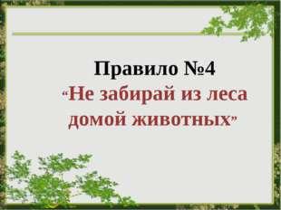 """Правило №4 """"Не забирай из леса домой животных"""""""