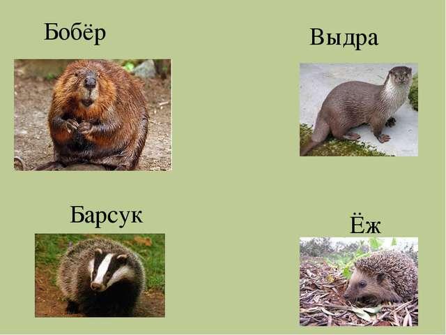 Бобёр Выдра Барсук Ёж