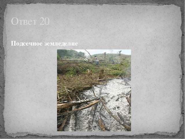 Подсечное земледелие Ответ 20