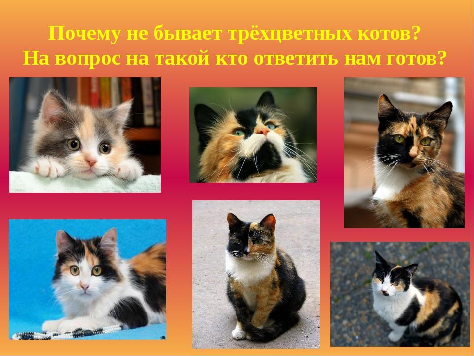 Почему трехцветных котов не бывает
