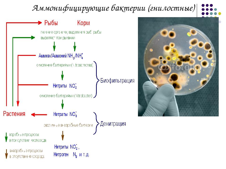 бактерии паразиты служат причиной инфекционного заболевания человека