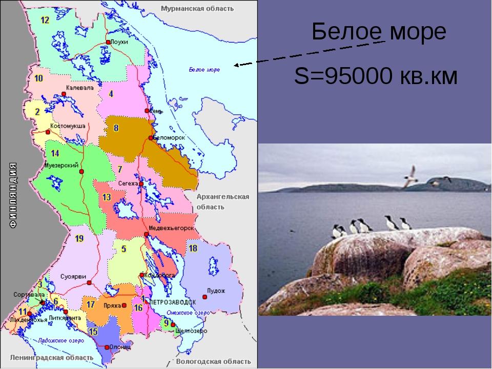 Белое море S=95000 кв.км
