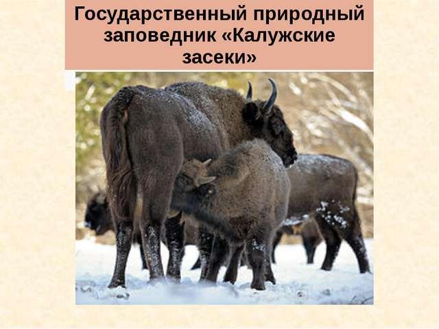 Государственный природный заповедник «Калужские засеки»