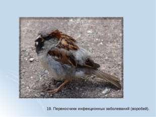 19. Переносчики инфекционных заболеваний (воробей).