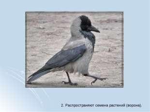 2. Распространяют семена растений (ворона).