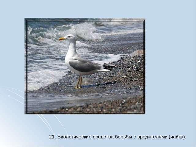 21. Биологические средства борьбы с вредителями (чайка).