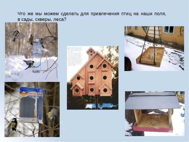 Что же мы можем сделать для привлечения птиц на наши поля, в сады, скверы, ле...