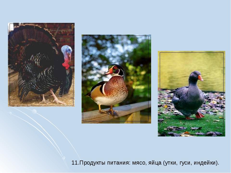 11.Продукты питания: мясо, яйца (утки, гуси, индейки).