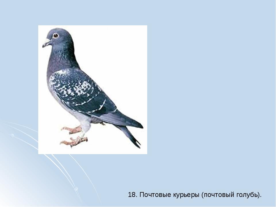 18. Почтовые курьеры (почтовый голубь).