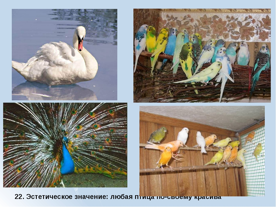 22. Эстетическое значение: любая птица по-своему красива
