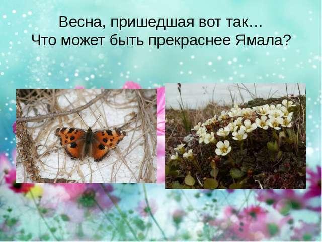 Весна, пришедшая вот так… Что может быть прекраснее Ямала?