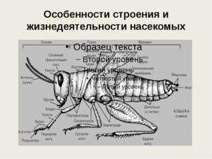 Особенности строения и жизнедеятельности насекомых