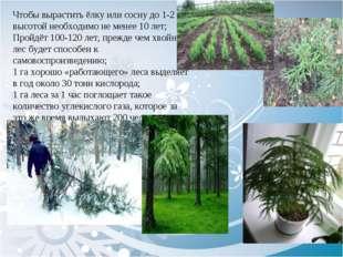 Чтобы вырастить ёлку или сосну до 1-2 м высотой необходимо не менее 10 лет;