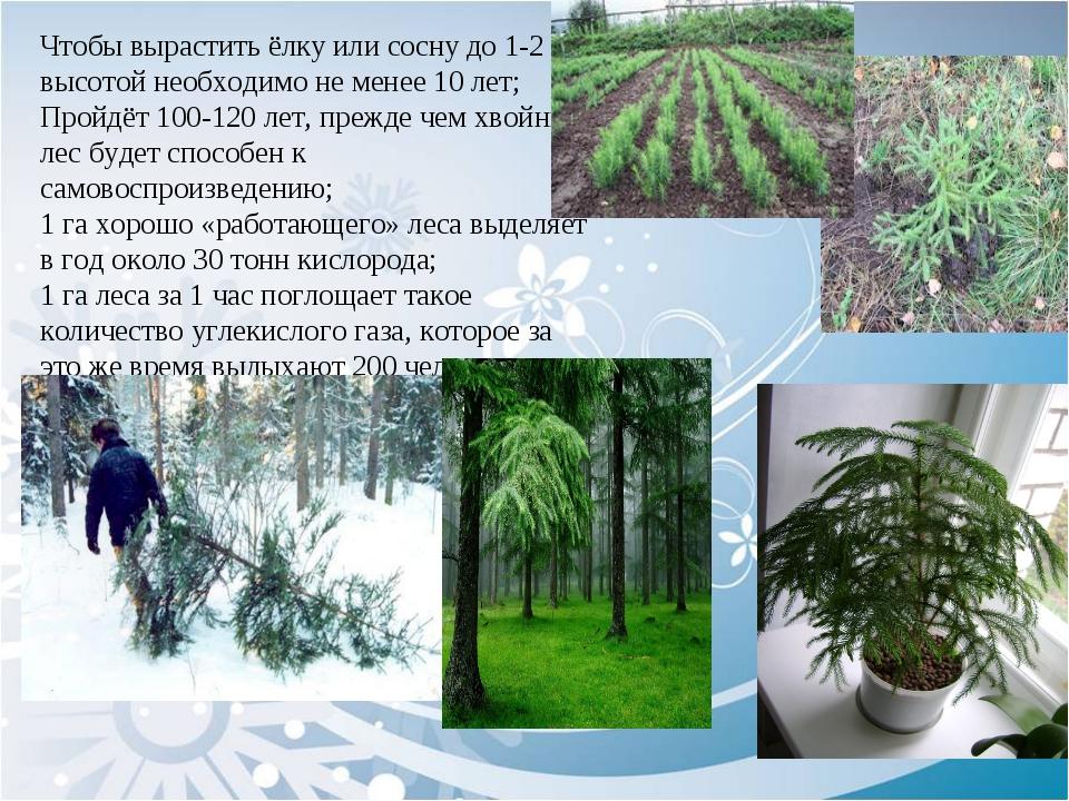 Чтобы вырастить ёлку или сосну до 1-2 м высотой необходимо не менее 10 лет;...