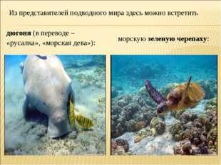 Из представителей подводного мира здесь можно встретить дюгоня (в переводе –