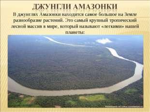 В джунглях Амазонки находится самое большое на Земле разнообразие растений. Э