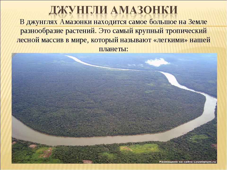 В джунглях Амазонки находится самое большое на Земле разнообразие растений. Э...