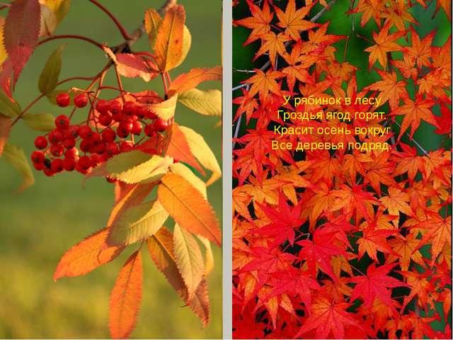 У рябинок в лесу Гроздья ягод горят. Красит осень вокруг Все деревья подряд.