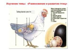Изучение темы: «Размножение и развитие птиц»