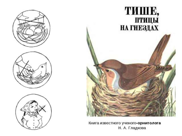 Книга известного ученого-орнитолога Н. А. Гладкова