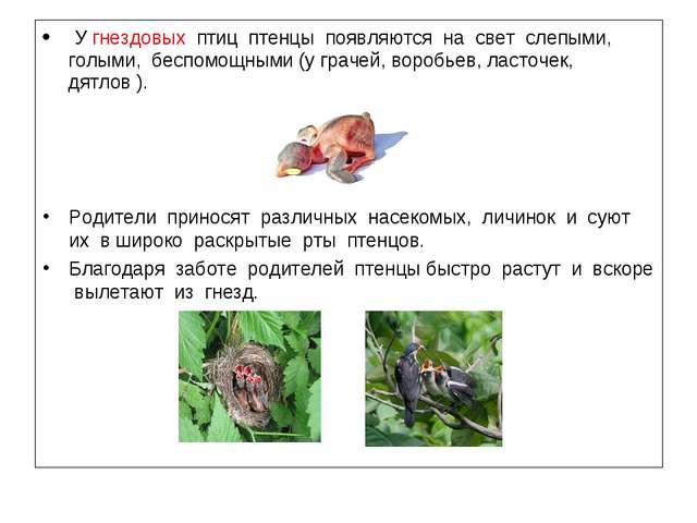У гнездовых птиц птенцы появляются на свет слепыми, голыми, беспомощными (у...