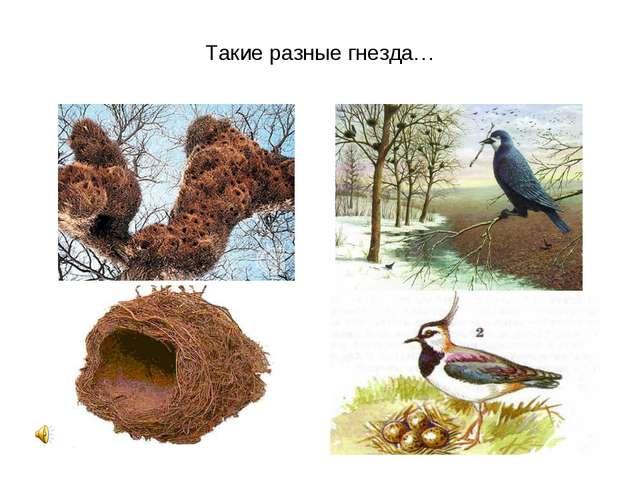 Такие разные гнезда…