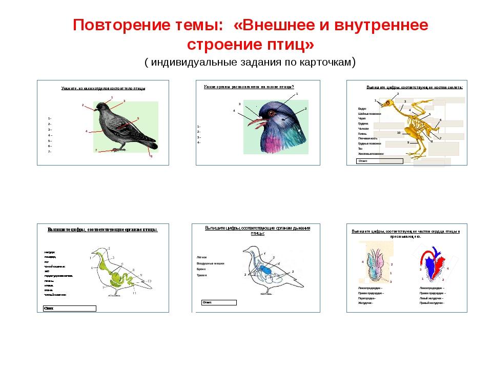 Повторение темы: «Внешнее и внутреннее строение птиц» ( индивидуальные задани...