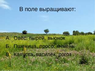 В поле выращивают: А. Овёс, пырей, вьюнок Б. Пшеница, просо, ячмень В. Капуст