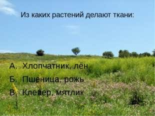 Из каких растений делают ткани: А. Хлопчатник, лён Б. Пшеница, рожь В. Клевер