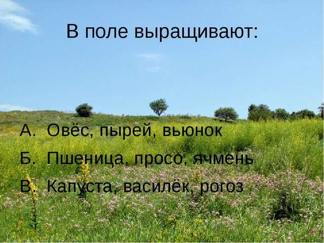 В поле выращивают: А. Овёс, пырей, вьюнок Б. Пшеница, просо, ячмень В. Капуст...