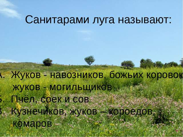 Санитарами луга называют: А. Жуков - навозников, божьих коровок, жуков - моги...