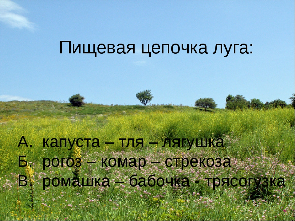 Пищевая цепочка луга: А. капуста – тля – лягушка Б. рогоз – комар – стрекоза...