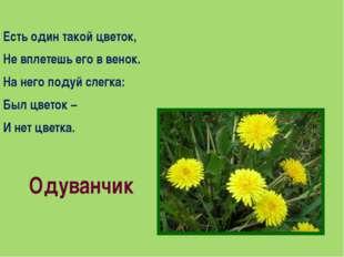 Есть один такой цветок, Не вплетешь его в венок. На него подуй слегка: Был цв