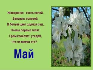 Жаворонок - гость полей, Запевает соловей. В белый цвет оделся сад, Пчелы пер