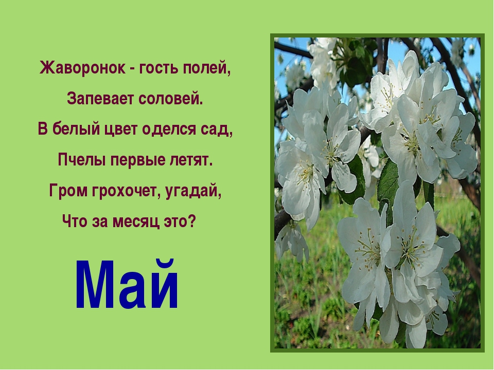 Жаворонок - гость полей, Запевает соловей. В белый цвет оделся сад, Пчелы пер...
