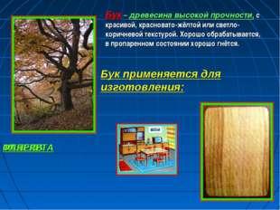 Бук – древесина высокой прочности, с красивой, красновато-жёлтой или светло-