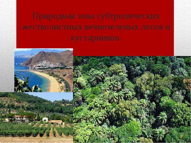 Природная зона субтропических жестколистных вечнозеленых лесов и кустарников.