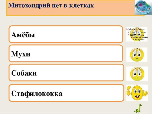 . Мухи Собаки Стафилококка Митохондрий нет в клетках Амёбы