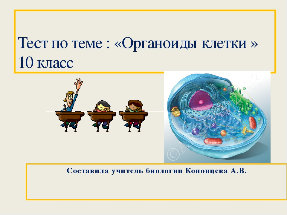 Составила учитель биологии Кононцева А.В. Тест по теме : «Органоиды клетки »...