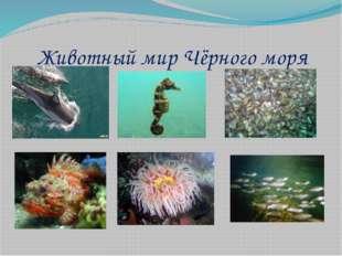 Животный мир Чёрного моря