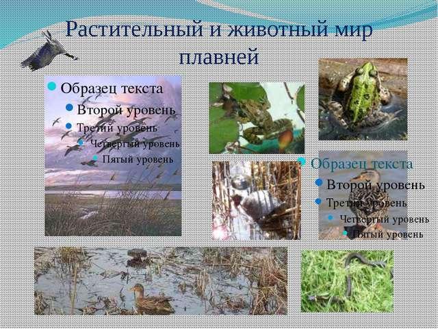 Растительный и животный мир плавней